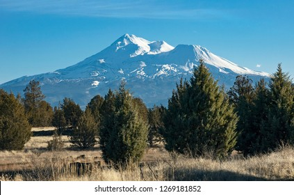 snow covered Mount Shasta in early winter with a juniper forest in the foreground near Montague, California