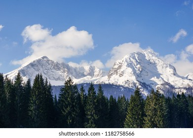 Snow covered mountain peaks as seen over the pine tree tops. Winter landscape in Durmitor National Park, Montenegro.