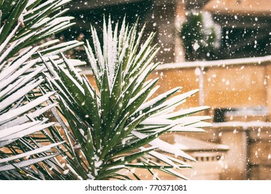 Snow covered palm tree