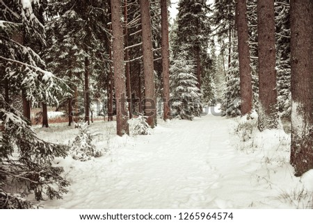 snow-covered-pine-tree-trunks-450w-12659