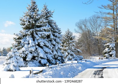 snow covered pine trees with fence and road in Michigan winter park