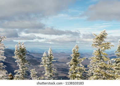 Snow covered pine trees in the mountains in winter