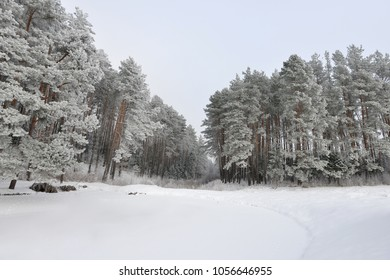snow covered pine trees on bank of frozen lake