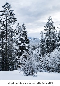 Snow covered pine trees and shrubs on a cloudy winter day, photographed from Northstar Village (ski resort), in Truckee, California near Lake Tahoe, with Martis Valley in the background