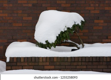 Snow covered plant in front of brick wall