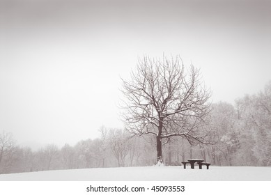 Snow covered pristine meadow with tree and idyllic bench