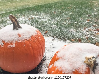 Snow Covered Pumpkins by Green Lawn