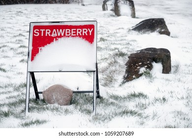 Snow covered sign, with only the word Strawberry visible
