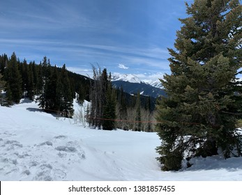 Snow covered ski resort with pine trees and blue sky