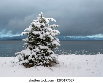 Snow covered spruce tree on the beach near Gustavus Alaska looking out at Icy Straight and mountains in the distance.