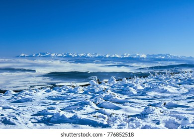 Snow covered spruces in the mountains in winter Beskidy in Poland