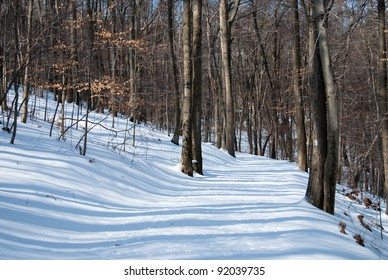 Snow Covered Trail Through the Woods