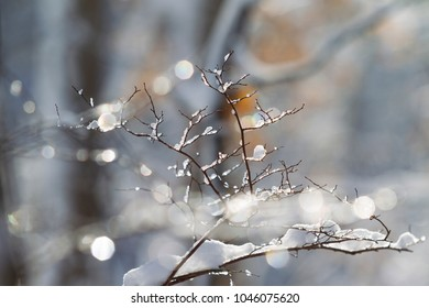 Snow Covered Tree Branches in Winter