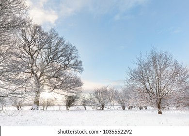 Snow covered tree line with early morning sunrise shining through the bare branches. Landscape in Norfolk UK