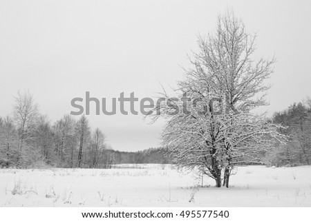 Snow covered tree at meadow in the woods in winter evening