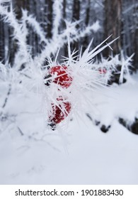snow covered tree. red berries in snow