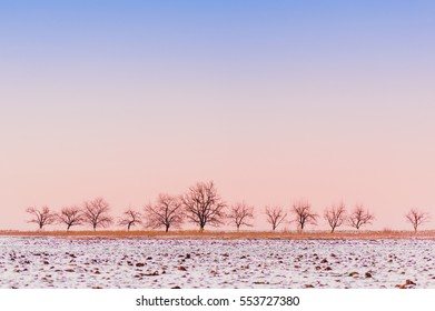 Snow covered tree standing in a frozen field, winter season