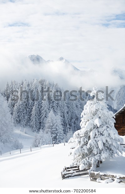 Snow covered tree in winter forest