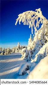 Snow covered tree in winter nature scene. Winter snow tree view. Winter snow scene. Ski track in winter snow scene