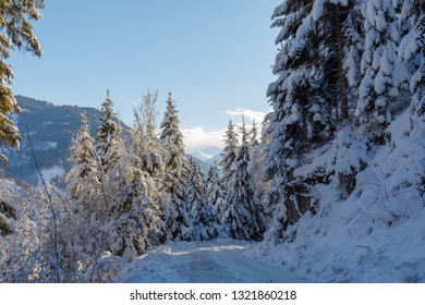 snow covered tree at winter path in austrian mountains