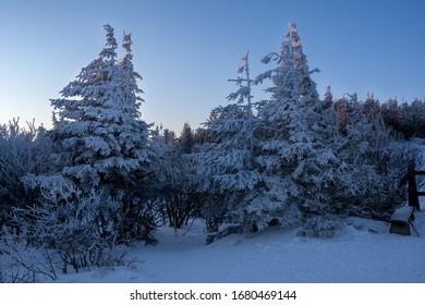 Snow covered trees in Babia Góra National Park, Poland - a winter night hike before sunrise (Drzewa pokryte śniegiem na zboczach Babiej Góry - nocna zimowa wędrówka przed wschodem słońca) - Shutterstock ID 1680469144