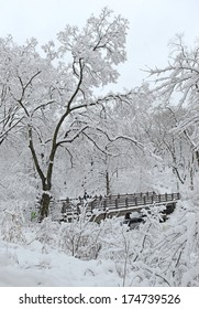 Snow Covered Trees, Central Park, New York City