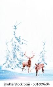 Snow covered trees. deer