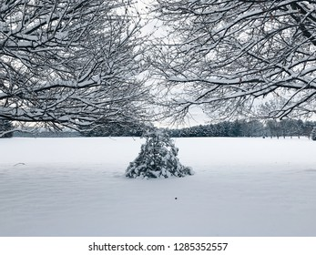 Snow covered trees in a field