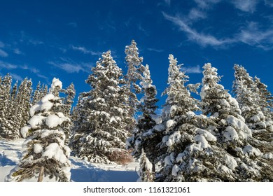 Snow covered trees in the forest in Banff National Park, Alberta, Canada