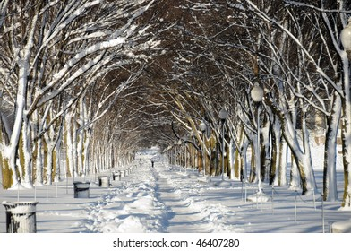 Snow covered trees lining a running path in Washington, DC after February 2010 storms.  Horizontal Photo.