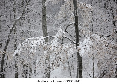 Snow covered trees in mountain