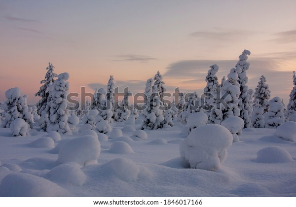 snow-covered-trees-on-cold-600w-18460171