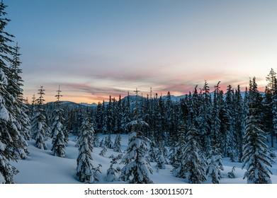 Snow covered trees on mountain at dusk, Mount Washington, Strathcona Provincial Park, British Columbia, Canada