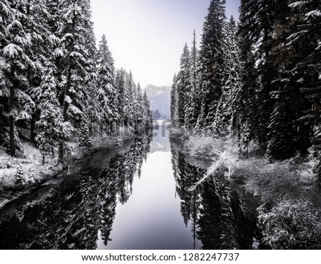 Snow covered trees reflecting