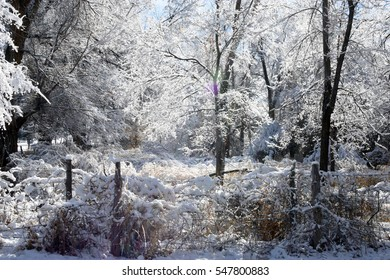 snow covered trees with sunlight sun flare in rural setting