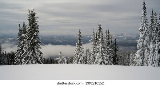 Snow covered trees, Thompson-Nicola Regional District,  Sun Peaks, British Columbia, Canada