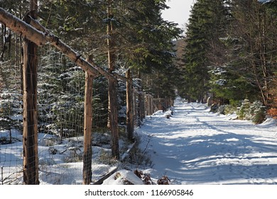 Snow covered winter path in the forest of green pines and spruces with a fencing grid running along the path. Sudetes mountains near Szklarska Poreba in southwestern Poland.