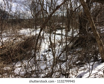 Snow covered wooded area