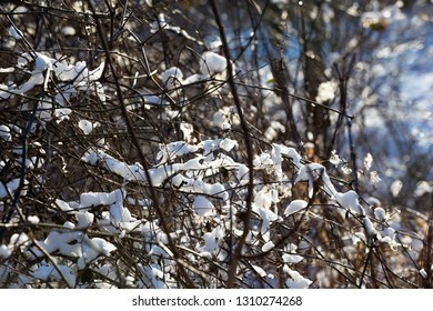 A snow covered woods