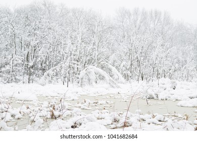 Snow covered woods in the wither