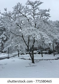 Snow covering everything in a suburban winter wonderland, trees and houses