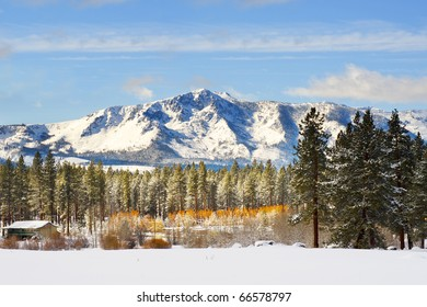 Snow covering mountain with tree in the foreground in winter time at Lake Tahoe, California