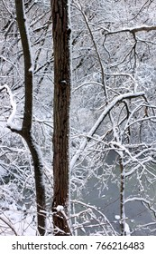 Snow covers everything in forest of northern Illinois