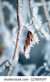 Snow crystal covered leaf on a frigid Minnesota day