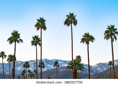 Snow dusts the San Jacinto mountains in contrast to the palm trees outside Palm Springs, California.