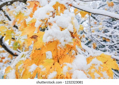 Snow and Fall colors