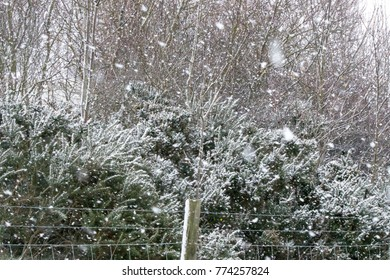 snow fall with shrub