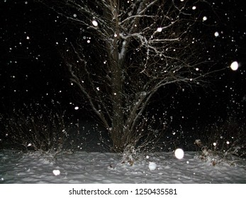Snow falling against a night time backdrop featuring a bare tree.