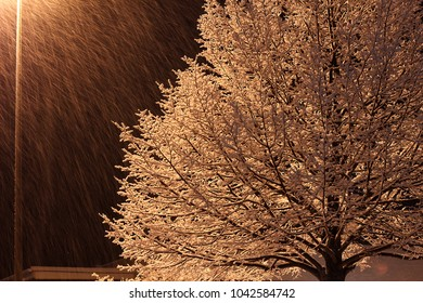 Snow falling and coating tree in city