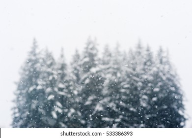 Snow falling heavily in front of a group of evergreen trees with focus on snowflakes creating a winter wonderland with copy space above